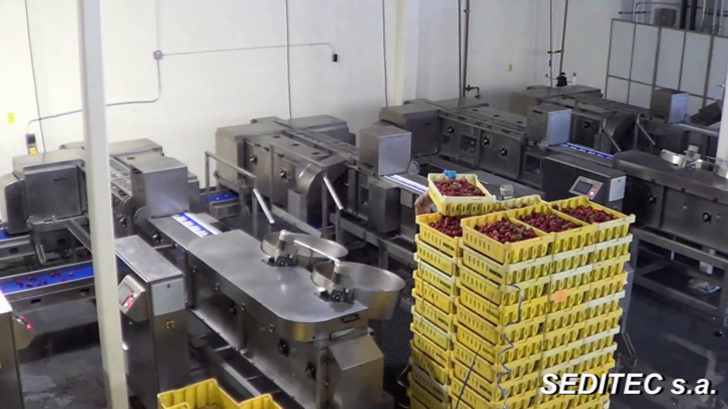 En el mes de mayo de 2017 se entregará la primera línea automatizada para el desrabado de fresas vendida en Estados Unidos